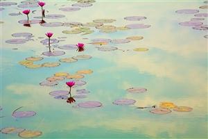 随拍――-池塘边