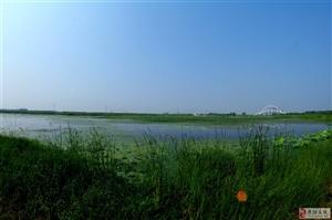 金堤河湿地里的燕鸥
