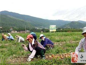 双牌县马铃薯种植喜获丰收