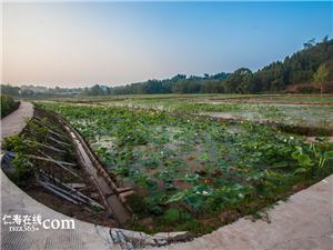又到了荷花盛开满池塘的季节,你确定要错过满井广桥的这片荷花吗?