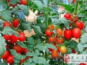 这5种水果最适合在阳台种,以后不用买水果了!