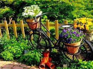 开在夏天里的花