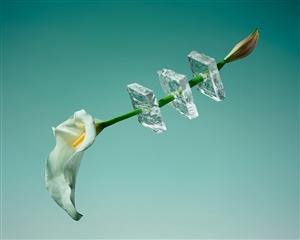 夏日中的一抹清凉~在淡雅的墨绿背景下,冰冻的花朵打造创意视觉大片
