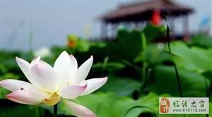 不用去西湖,陕西10个美爆的赏荷地在此,惊艳整个夏天!