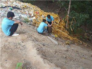枣强环保行之土壤与水的取样分析