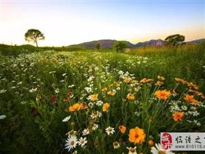 花海、草场、骏马、牛羊…西安旁边竟然还有那么好的草原风光!