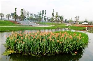 建设中的狮子堰市政公园,预计八月搞定~咱们老百姓又多了一个休闲的地方