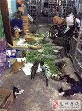 主人把猫薄荷放在院子后就出门买菜,回家时却被眼前景象吓死!