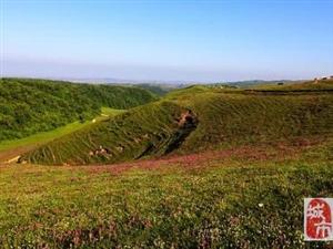 张家川有一个美丽的地方,它的名字叫白石咀牧场