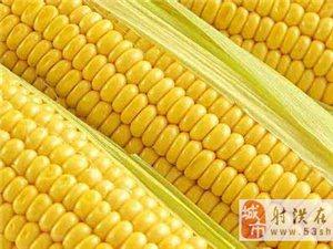 """玉米竟是""""长寿食物"""",防癌抗癌功效奇,但很多人都吃不对"""