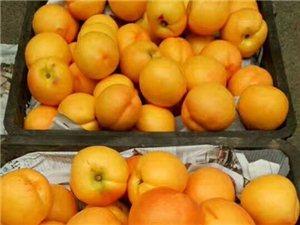 黄桃圣地自家种植