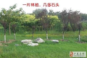 一片林地,几多石头