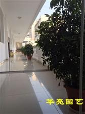 绿色空间,盆景租赁篇――广汉地税局实景拍摄(图片)