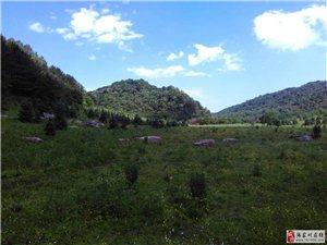 云凤景区有佳境,绿意盎然万树谷
