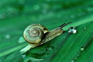 云飞雨飘,山谷小村里透着湿润的清凉,这是个蜗牛与水滴的绿色季(图片)