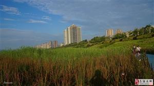 南溪滨江湿地公园,7月20日摄