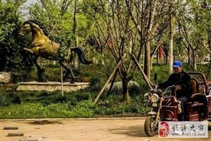 临潼马陵�V公园里的几匹马