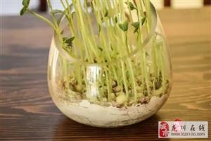 龙川媳妇把装修的硅藻泥倒进花盆,奇迹发生了!你绝对想不到