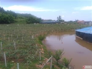 自贡第一家集有机红心猕猴桃、蘑菇采摘,农场体验于一体的处女地