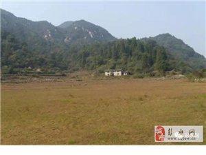 彭水县长生镇的农民都发家致富了,原因居然是这样......