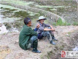 澳门赌场网址县长生镇的农民都发家致富了,原因居然是这样......