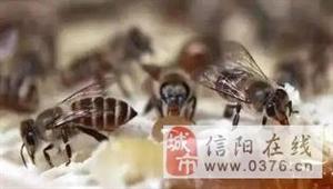 为什么蜂蜜会出现气泡,遇到这种情况请你别吃了!