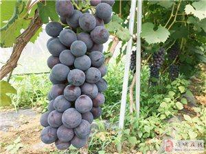 天好热,好想吃葡萄,约吗?