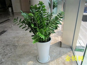 在这个炎热的夏日,,给眼睛来点儿绿色植物降降温(图片)