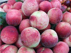 谁家种植桃子联系我