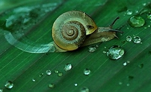 蜗牛与水滴的绿色季