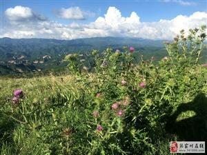 北关山最美颜值上线,你还不来?