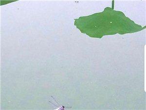 麻大湖美景�