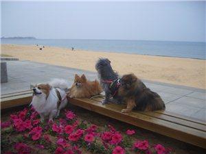 威海风景和狗狗