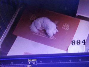 同事小狗于7月25日在威尼斯人平台体育馆重庆银行附近丢失,同事很着急,找到重谢