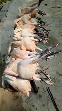 【爆料】款场乡党委书记为辖区贫困户卖鸡
