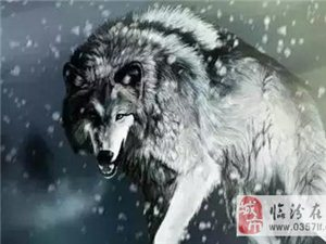 看《战狼2》感悟:男人,要像狼一样,充满血性
