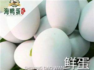 100元领养就能吃到180枚纯放养的海鸭蛋,太超值了