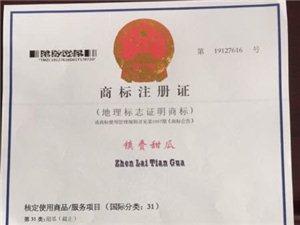 """吉林省唯一的甜瓜地理标志证明商标产品――-""""镇赉甜瓜"""""""