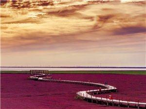 红海滩廊道踏霞漫步