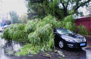 停车等红灯大树砸过来车内母子没受伤,吓够呛