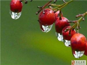 秋雨�d�d