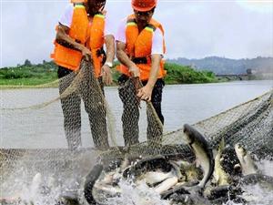四川广安渔民拉网捕鱼