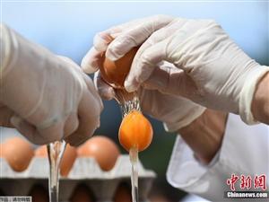 比利时小镇用6500个鸡蛋制作直径4米煎蛋饼