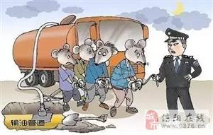 """""""油耗子""""出没?看信阳蜀黍怎么""""灭鼠""""!"""
