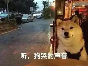 何姿秦凯居然在这里过七夕!!