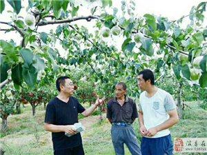 中国金梨之乡传来好消息