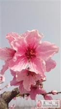 《醉美家乡录》第2期:【紫云镇】之马赵村、侯庄村、杨湾村、黄西村