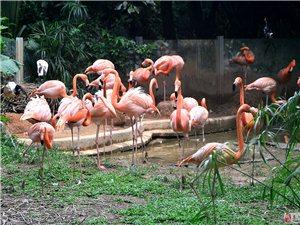 深圳西丽动物园