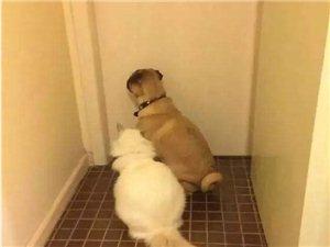 自从养了宠物,上厕所就这样了……