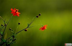白石水库湿地的花